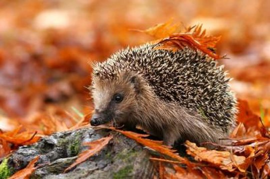 """Résultat de recherche d'images pour """"animaux de l'automne"""""""