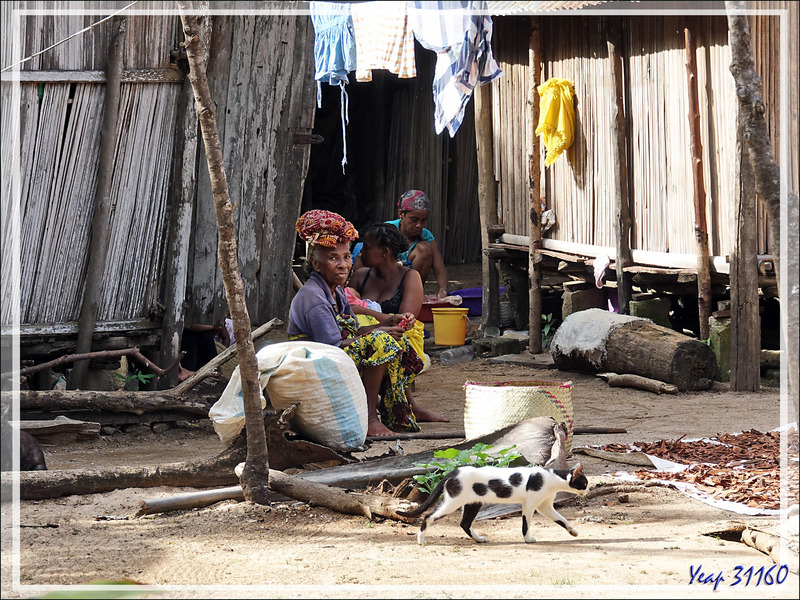Nosy Sakatia : le paradis des chats - Madagascar