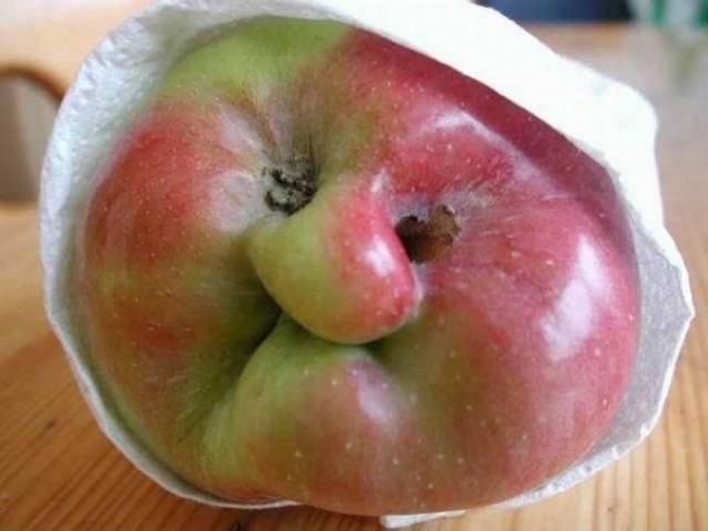 FRUITS  ou  LEGUMES  4