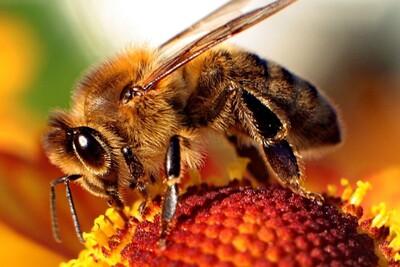 Les abeilles sont indispensables à notre survie
