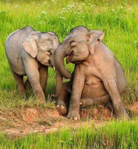 C  P  ELEPHANTS  3