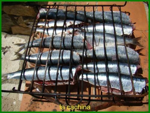 sardines--27-.JPG