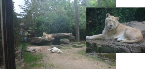 LA FLECHE -le Zoo