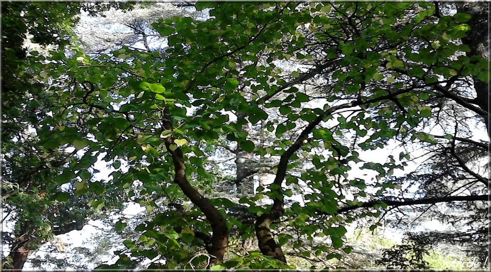 Un arbre des arbres ...