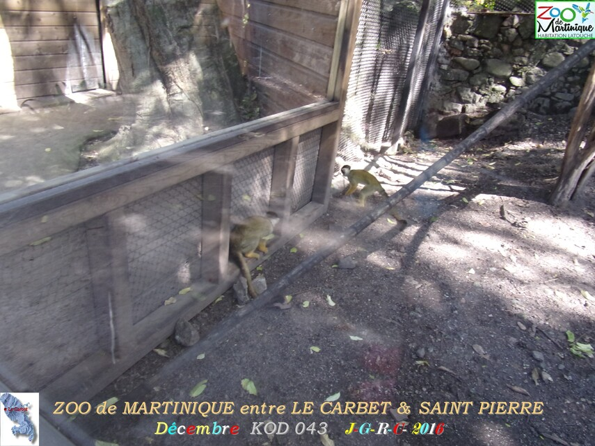 ZOO de MARTINIQUE 1/5 - 1/15  LE CARBET  972      D  02/07/2017