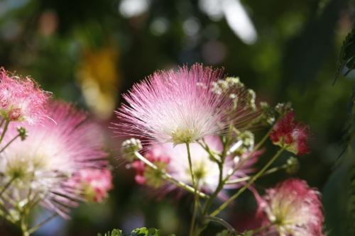 fleurs d été 1