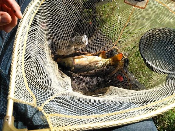 Pêche au coup à l'étang de Sassay - carpe