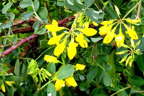 Des fleurs jaunes !