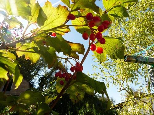 L'automne au jardin