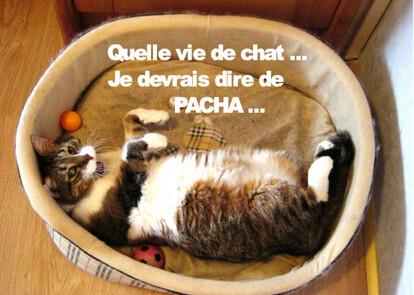 Voyou, qu'elle vie de chat, Mars 2013 4