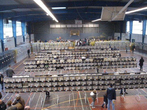 - Championnat du Morbihan 2016