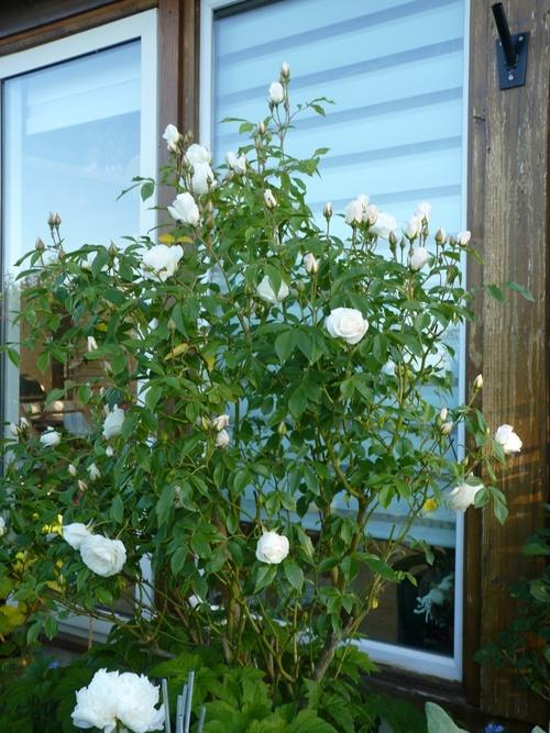 le jardin de mai et Juin