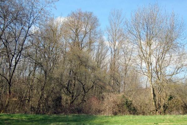 W8 - Les bords du bois
