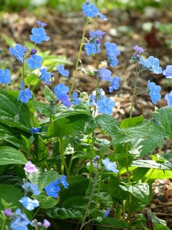 floraison d'avril
