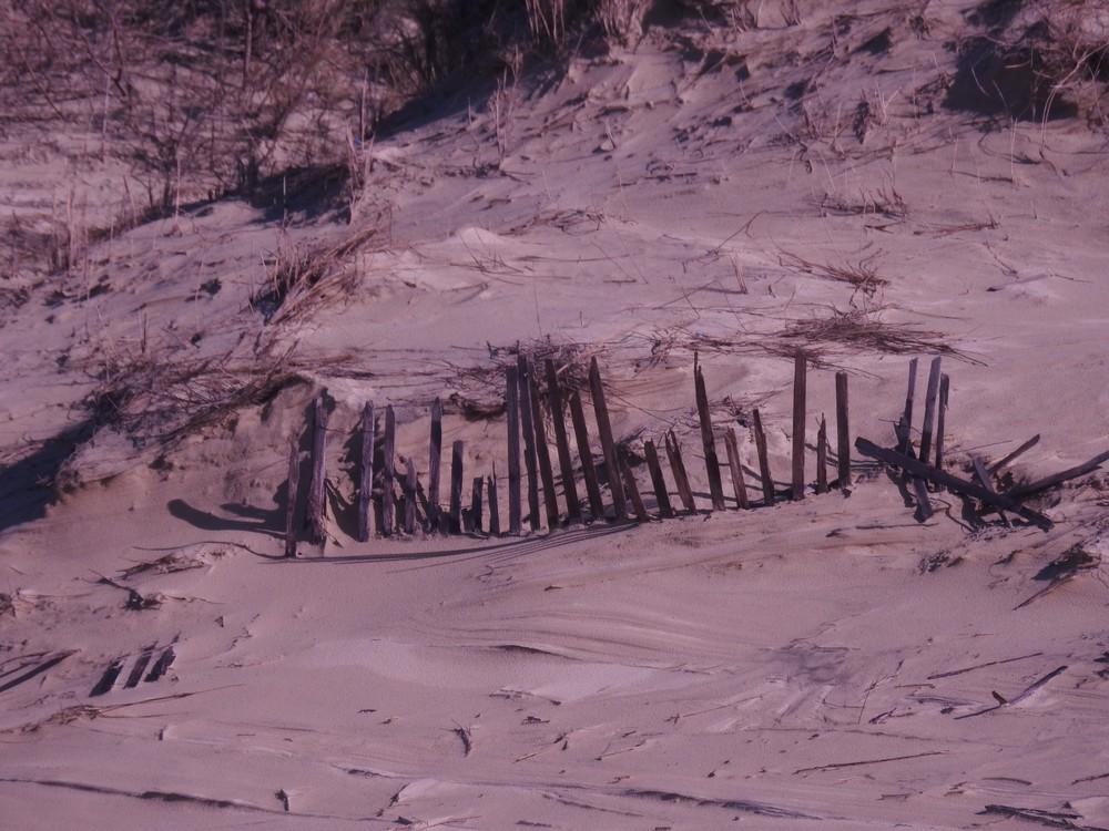 Une courageuse petite ganivelle sur la Dune du Pyla...
