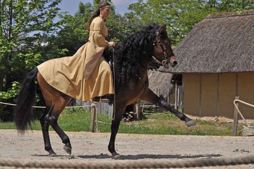 cheval-cavaliere-3820.jpg