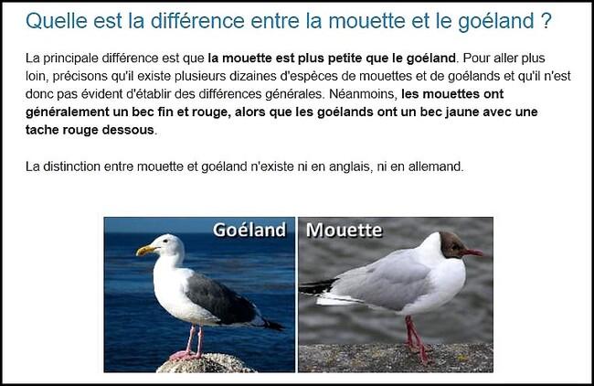 Goélands à Pourville s/mer