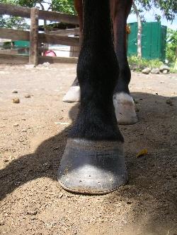 ses pieds ferrés et sa deferrure