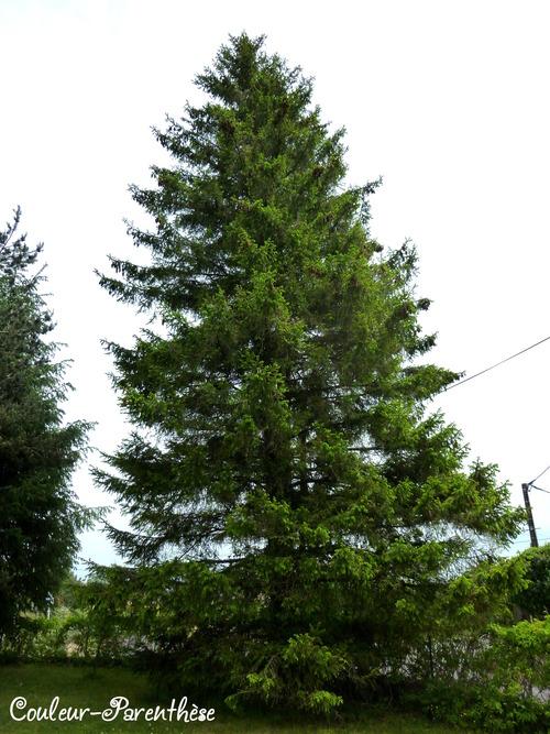 D'arbre en arbre!