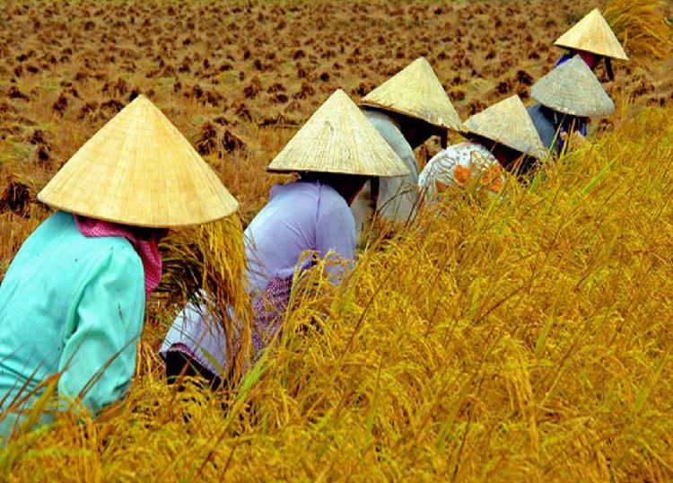 Images du monde : Vietnam 2