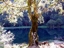 L'étang de Bethmale