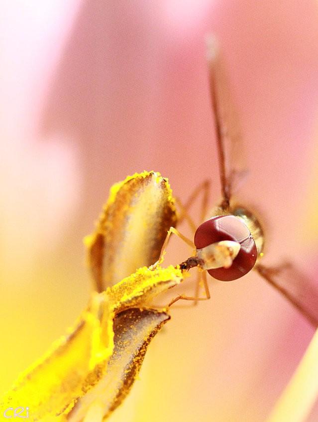 macros-insectes 2992