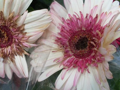 Une fleur nouvelle