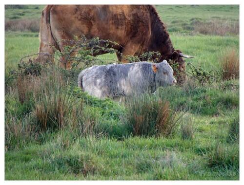 le marais breton