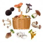 Faire pousser des champignons 2