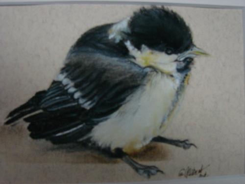 Petite mésange tombée du nid, pastel sec...