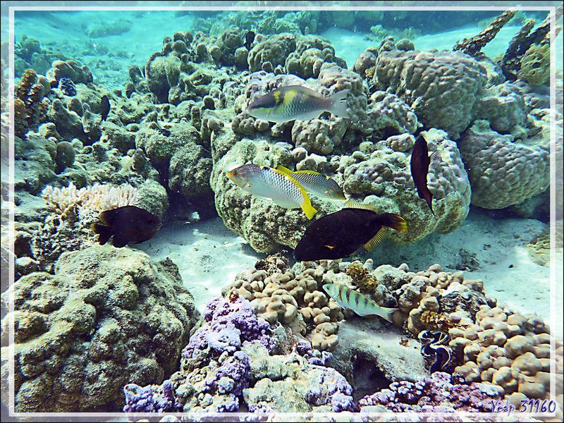 Le soir arrive, dernier regard sur le Jardin de corail - Motu Tautau - Taha'a - Polynésie française