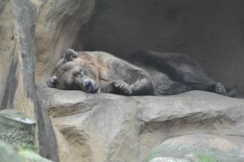 dierenpark amersfoort 2011 004
