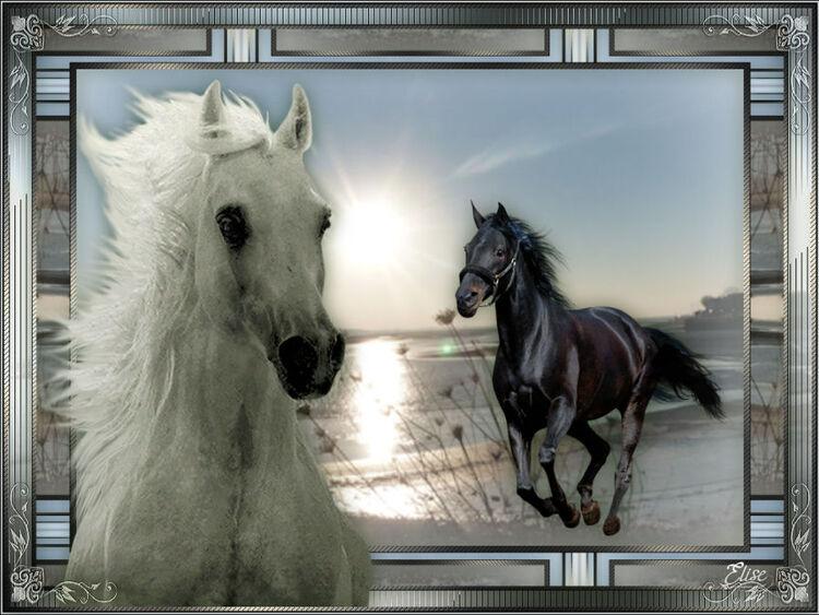 Horse de Violine PSP