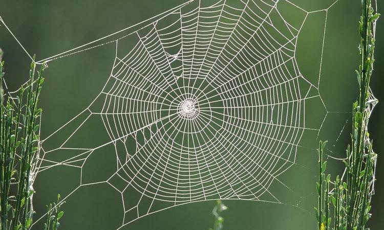 Le foyer du musulman et le foyer de l araignée : miracle scientifique!