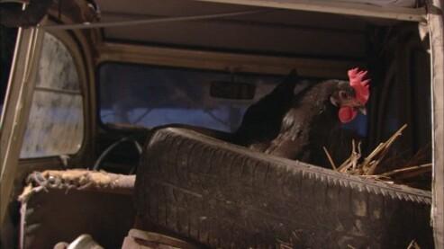 09 - Les poules et les voitures