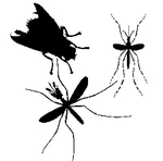 Liste Insectes