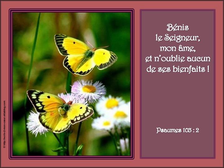 Bénis le Seigneur, mon âme - Psaumes 103 : 2