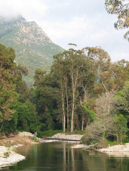 Vertus médicinales des arbres : EUCALYPTUS