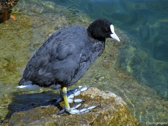 suisse 2009_oiseaux (43)