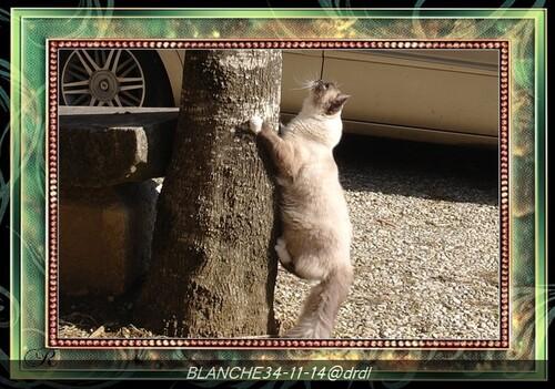 Descente de l'arbre, enfin....