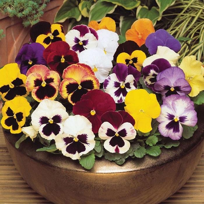 Top 10 des belles fleurs de printemps pour votre jardin