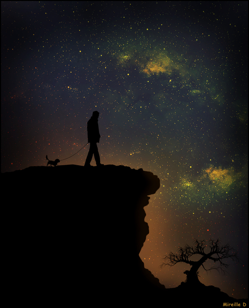 Silhouettes par Nuit Étoilée