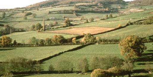 rural-paturages-verts-TB.jpg