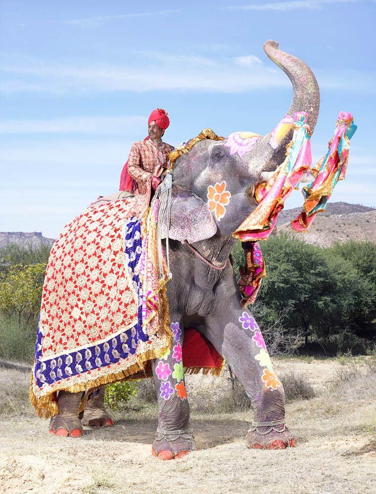 charles-freger-painted-elephants-15
