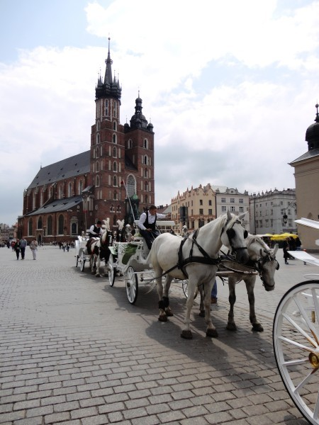 chevaux-cracovie.JPG