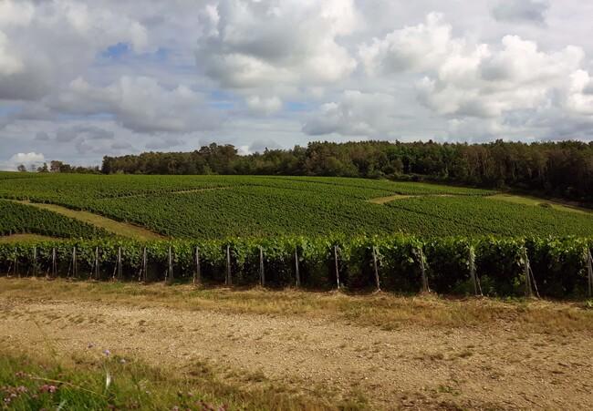 Visite de la ferme de la Charme du Moulin avec l'OT de Châtillon-sur-Seine