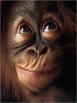 Penser comme un singe