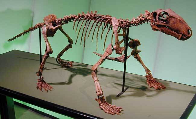 Biarmosuchus