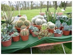 Botaniques de Chèvreloup avril2010007-copie-1