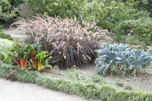 Plantes ,fruits,fleurs